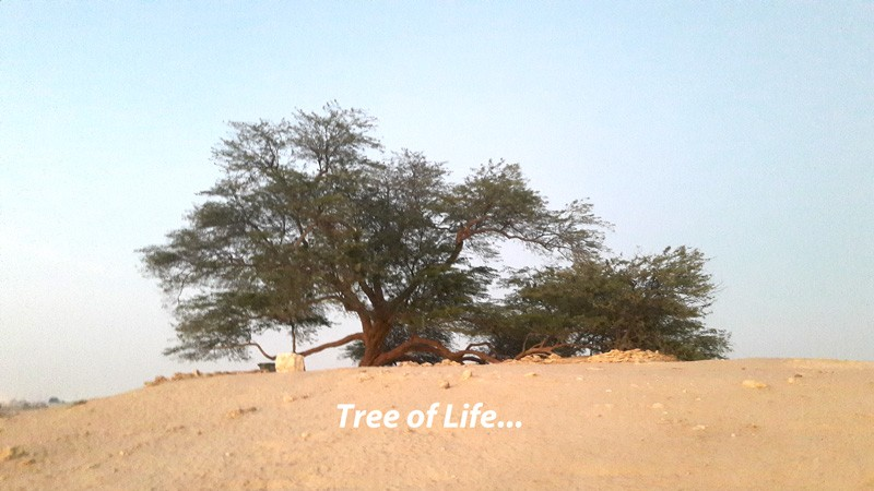 tree-of-life-in-bahrain